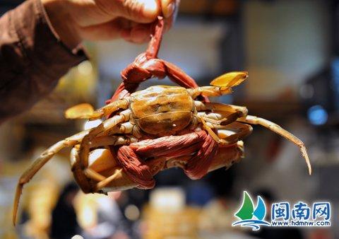 旅游市场捆蟹绳重约半斤!厦门一家餐饮店被查处